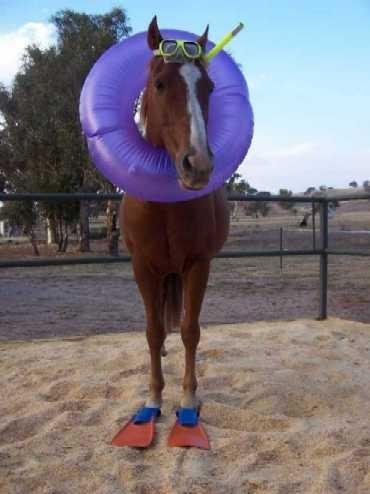 seahorse_1